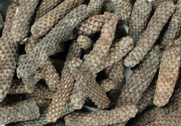 aimil-pipe-longum